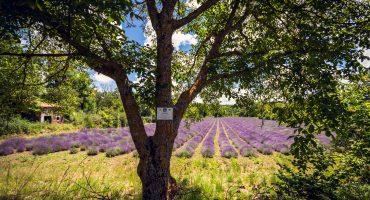 Un petit coin de Provence à Blanzat