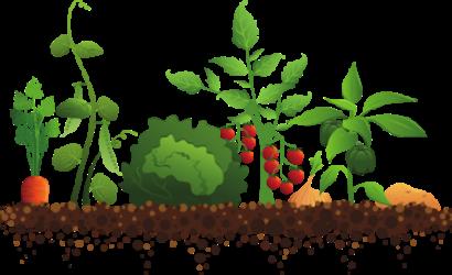 Marché aux plants